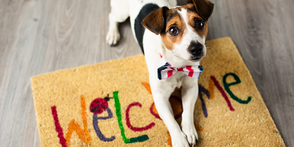 Promote Pet Friendly Features when Selling Your Home - dog welcome mat